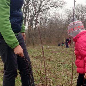 "Padurea""Mic si Ecologist"" - 19.03.2016  - la Surlari"